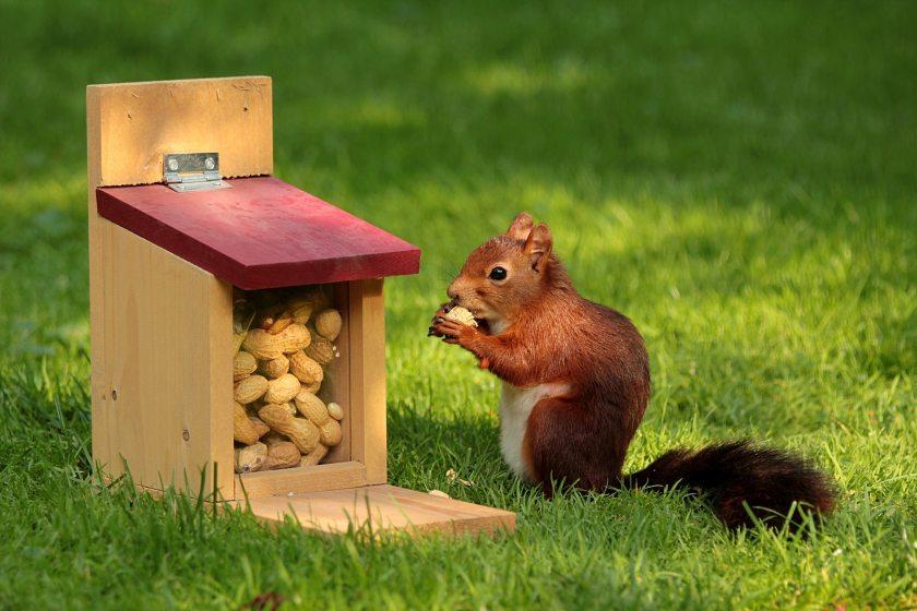 animal-peanuts-pet-34109